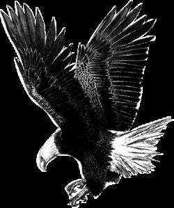 fravelbird