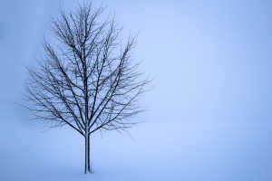 tree-1056598_960_720